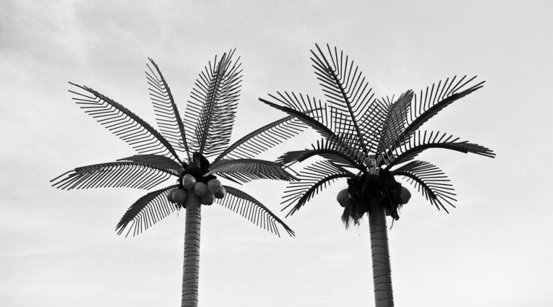 Palm Trees Rome GA